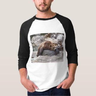 Oso grizzly que descansa sobre roca playera