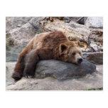 Oso grizzly que descansa sobre roca postal