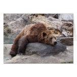 Oso grizzly que descansa sobre roca tarjeta de felicitación