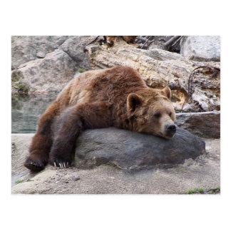 Oso grizzly que descansa sobre roca tarjeta postal