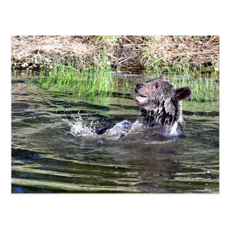 Oso grizzly que juega en el agua tarjeta postal