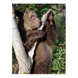 Oso grizzly que se inclina en un árbol postales