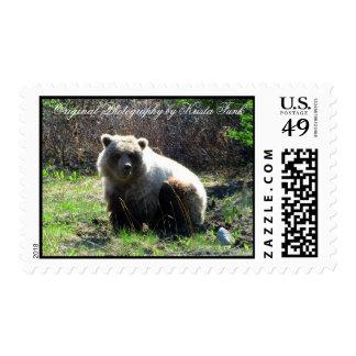 Oso grizzly rechoncho de CGB Sello