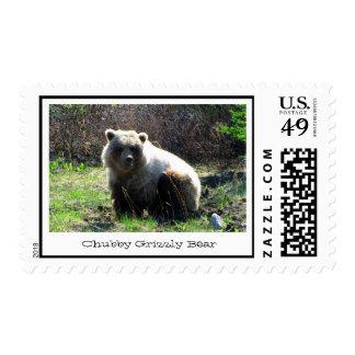 Oso grizzly rechoncho de CGB Franqueo