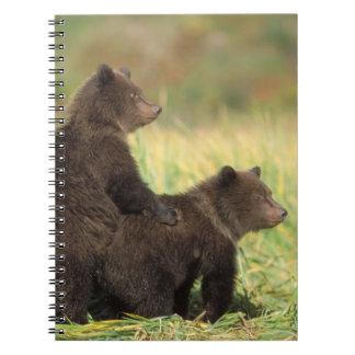 oso marrón, arctos del Ursus, oso grizzly, Ursus 2 Libreta