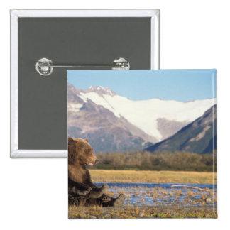 oso marrón, arctos del Ursus, oso grizzly, Ursus 2 Pin Cuadrada 5 Cm