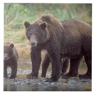 oso marrón, arctos del Ursus, oso grizzly, Ursus 3 Azulejo Cuadrado Grande