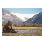 oso marrón, arctos del Ursus, oso grizzly, Ursus 3 Fotografia