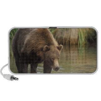 oso marrón, arctos del Ursus, oso grizzly, Ursus 3 Laptop Altavoz