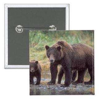 oso marrón, arctos del Ursus, oso grizzly, Ursus 3 Pin Cuadrada 5 Cm