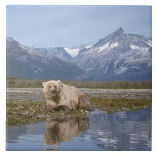 oso marrón, arctos del Ursus, oso grizzly, Ursus 4 Azulejo Cuadrado Grande