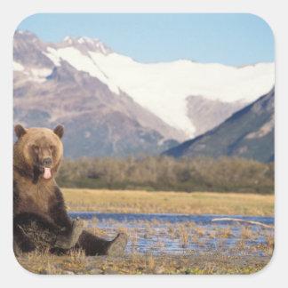 oso marrón, arctos del Ursus, oso grizzly, Ursus 5 Calcomanías Cuadradass Personalizadas