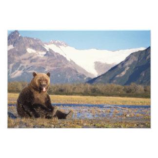 oso marrón, arctos del Ursus, oso grizzly, Ursus 6 Fotos