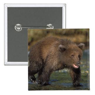 oso marrón, arctos del Ursus, oso grizzly, Ursus 6 Pin Cuadrada 5 Cm