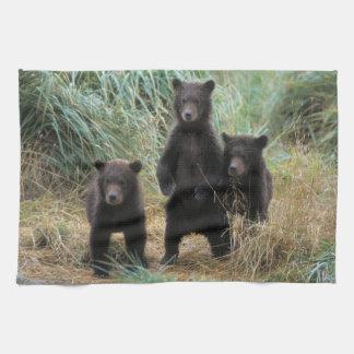 oso marrón arctos del Ursus oso grizzly Ursus 7