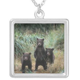 oso marrón, arctos del Ursus, oso grizzly, Ursus 7 Colgante Cuadrado