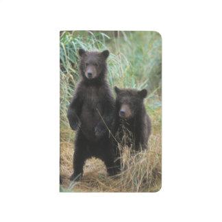 oso marrón, arctos del Ursus, oso grizzly, Ursus 7 Cuaderno Grapado