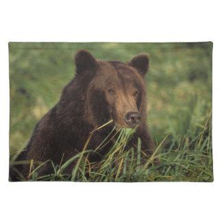 oso marrón, arctos del Ursus, oso grizzly, Ursus 7 Mantel
