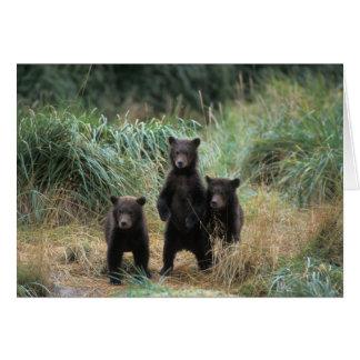 oso marrón arctos del Ursus oso grizzly Ursus 7 Felicitacion
