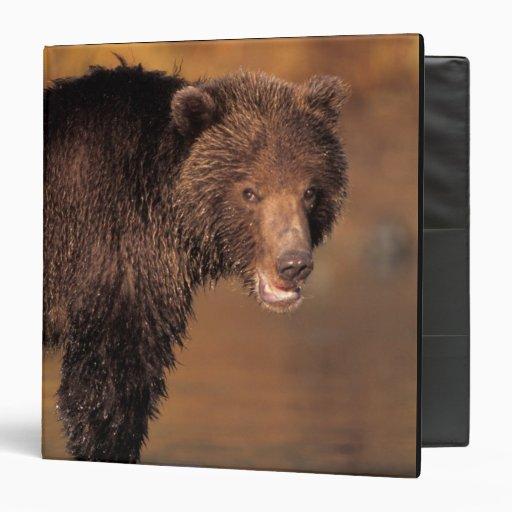 oso marrón, arctos del Ursus, oso grizzly, Ursus 8