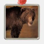 oso marrón, arctos del Ursus, oso grizzly, Ursus 8 Ornato