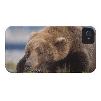 oso marrón, arctos del Ursus, oso grizzly, Ursus 8 iPhone 4 Case-Mate Funda