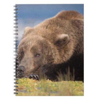 oso marrón, arctos del Ursus, oso grizzly, Ursus 8 Libros De Apuntes Con Espiral