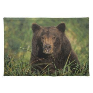 oso marrón, arctos del Ursus, oso grizzly, Ursus 9 Mantel