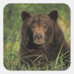 oso marrón, arctos del Ursus, oso grizzly, Ursus 9 Calcomanías Cuadradass