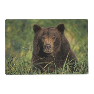 oso marrón, arctos del Ursus, oso grizzly, Ursus 9 Tapete Individual