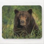 oso marrón, arctos del Ursus, oso grizzly, Ursus 9 Tapetes De Ratones