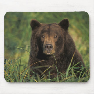 oso marrón arctos del Ursus oso grizzly Ursus 9 Tapetes De Ratones