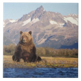 oso marrón, arctos del Ursus, oso grizzly, Ursus Azulejo Cuadrado Grande