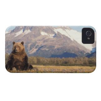 oso marrón, arctos del Ursus, oso grizzly, Ursus Case-Mate iPhone 4 Coberturas