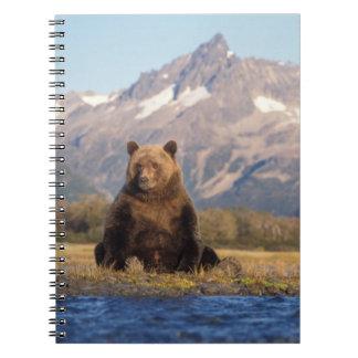 oso marrón, arctos del Ursus, oso grizzly, Ursus Libreta Espiral