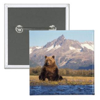 oso marrón, arctos del Ursus, oso grizzly, Ursus Pin Cuadrada 5 Cm