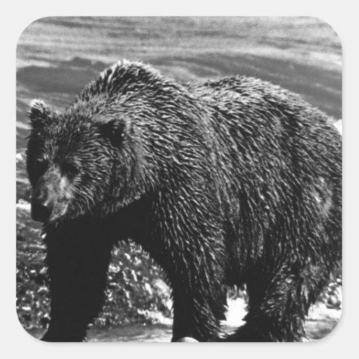 Oso marrón de los E.E.U.U. Alaska del vintage Etiqueta