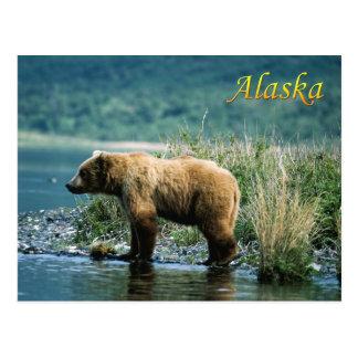 Oso marrón del Kodiak, Alaska Tarjeta Postal