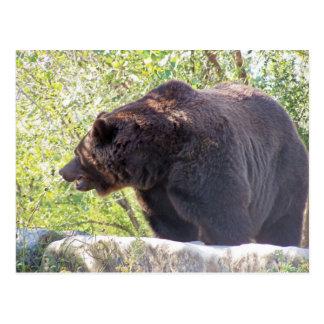 oso marrón sonriente postal