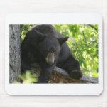 oso negro alfombrilla de ratón