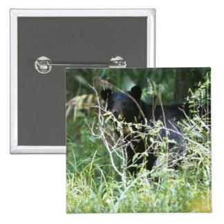 Oso negro bajo cubierta pin cuadrado