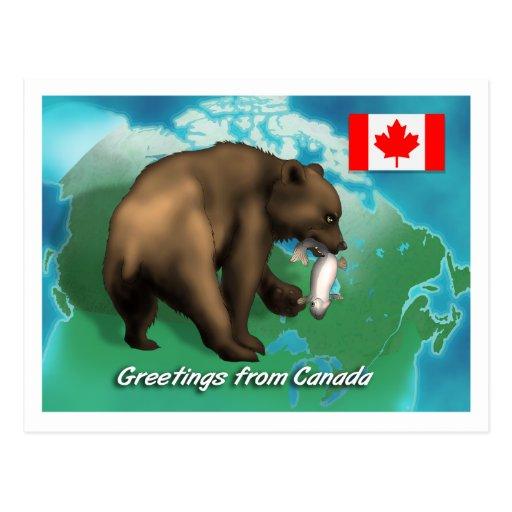 Oso negro canadiense postales