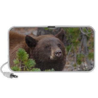 oso negro, color de canela portátil altavoces