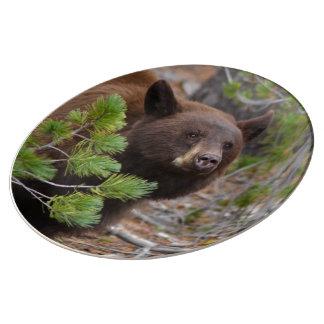 Oso negro con color rubio platos de cerámica