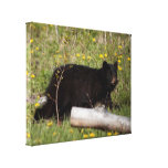 Oso negro Cub de BLBC Impresión En Lona