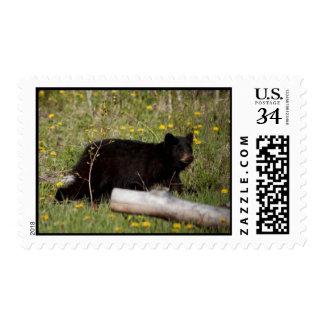 Oso negro Cub de BLBC Timbre Postal