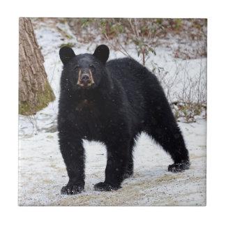 Oso negro de Pennsylvania en invierno Azulejo Cuadrado Pequeño