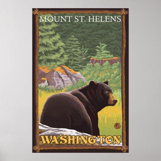 Oso negro en el bosque - el Monte Saint Helens, WA Posters
