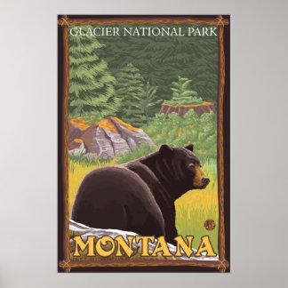 Oso negro en el bosque - Parque Nacional Glacier Poster