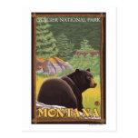 Oso negro en el bosque - Parque Nacional Glacier,  Postal